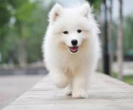 选择宠物美容培训学校,你被学费套路了吗?